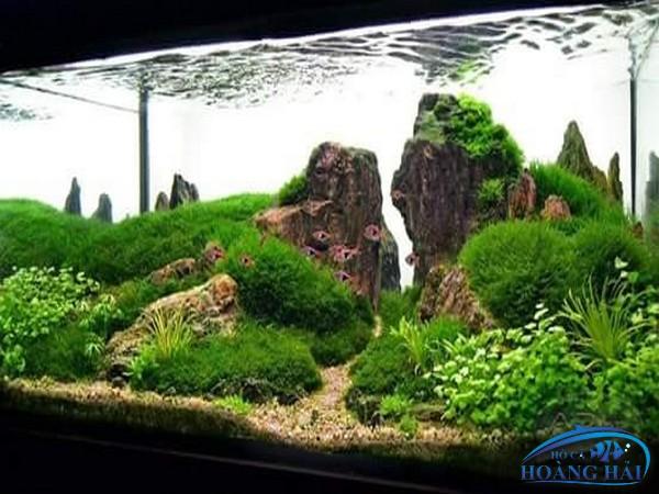 ho-ca-thuy-sinh-1526 Tư vấn thiết kế lắp đặt hồ cá thủy sinh tận nơi