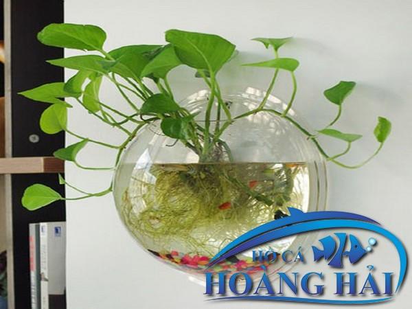 ho-ca-treo-tuong-mini-1235 Những mẫu hồ cá treo tường mini đẹp