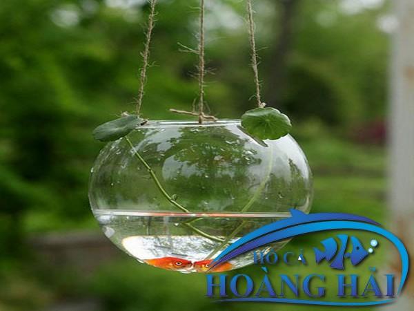 ho-ca-treo-tuong-mini-7896 Những mẫu hồ cá treo tường mini đẹp