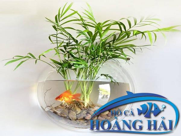 ho-ca-treo-tuong-mini-9543 Những mẫu hồ cá treo tường mini đẹp