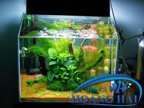 mau-ho-thuy-sinh-tu-lam-don-gian-7546 Hồ cá thủy sinh thú chơi cho người đam mê