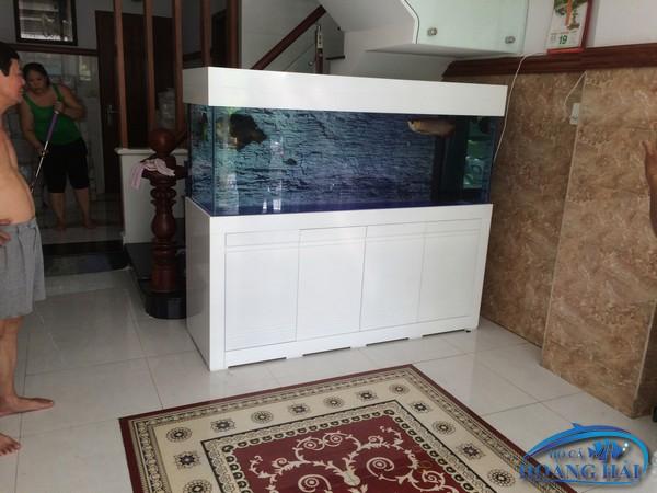 thi-cong-ho-ca-rong-quan-11-5432 Thi công hồ cá rồng Chú Tài Quận 11