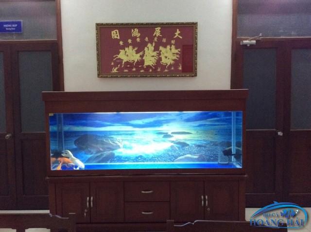 ho-ca-rong-2016-4364 Thi công Hồ Cá Rồng Bình Phú Thủ Đức