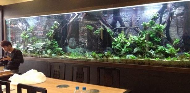 hocahoanghai Kinh nghiệm thiết kế bể cá tấm kính lớn