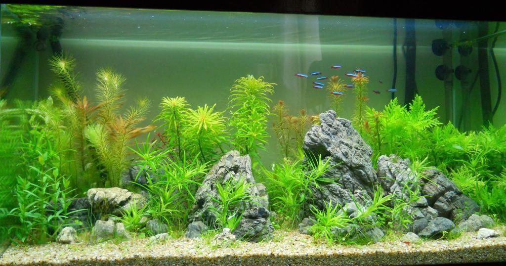 1547084614 Tại sao việc lắp đặt hồ cá tại nhà riêng lại ngày càng phổ biến?