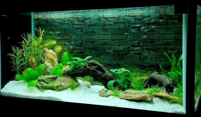 NM238sXE1bdzzCPygHWXbaojca3KwgwE Cách lựa chọn hồ cá treo tường chất lượng