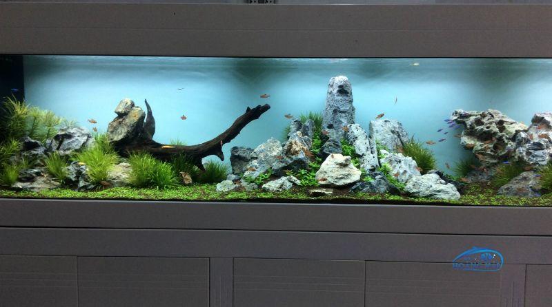 yyC0rR65ASFsifc7ZfWaGQ0HMUnaUGc4 Nên đặt bể cá ở đâu thì phù hợp với không gian của căn phòng
