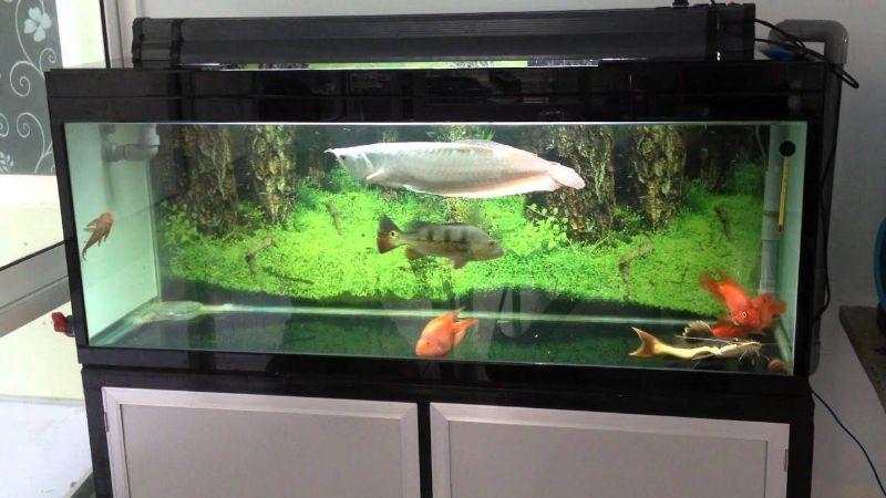 dozMew5UG78IIkiq0FRtf2rFY0VvGZbW Những bước chuẩn bị hồ cá đúng chuẩn và hiệu quả