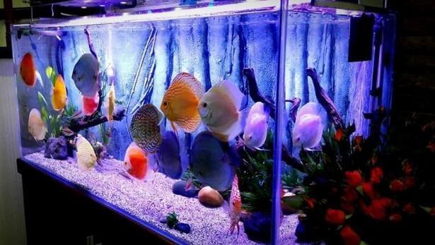 qtorDNgnh6hQxB3TkINPUFqIY8Nyq6jH Cách chọn cá cảnh phù hợp với mệnh của gia chủ