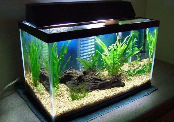Wr2jk4BCLAeWJiYY9bG0gtRjIVP9HAlp Lợi ích của những hồ cá thủy sinh trong gia đình