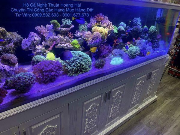ho-ca-bien26-1-e1628126453373 Thi công hồ cá nước mặn đẹp tại TPHCM