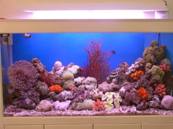 ho-ca-bien10-e1628126640322 Thi công hồ cá nước mặn đẹp tại TPHCM
